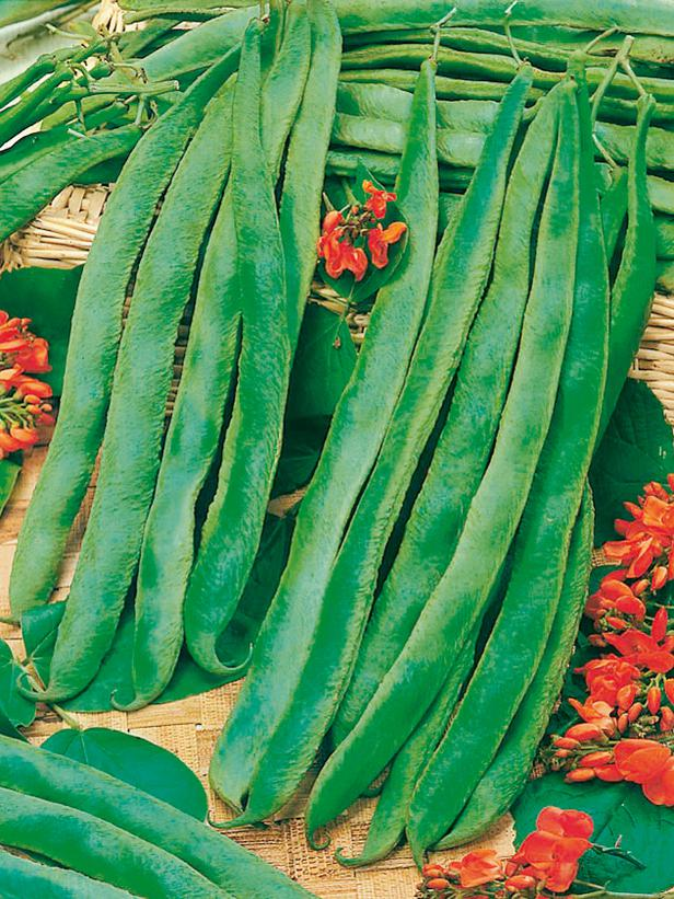 Butler Runner Beans are Prolific and Stringless